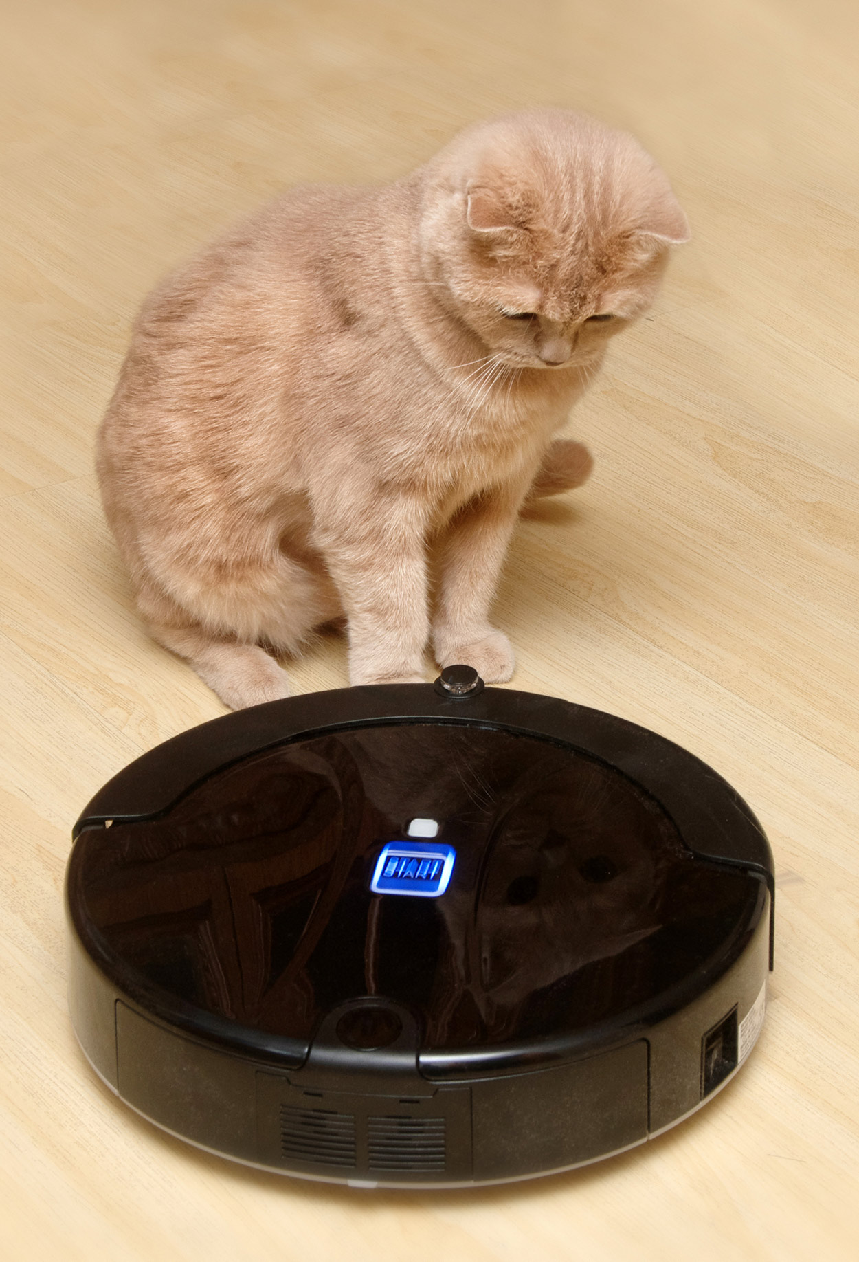Best Vacuum Cleaner For Dog And Cat Hair