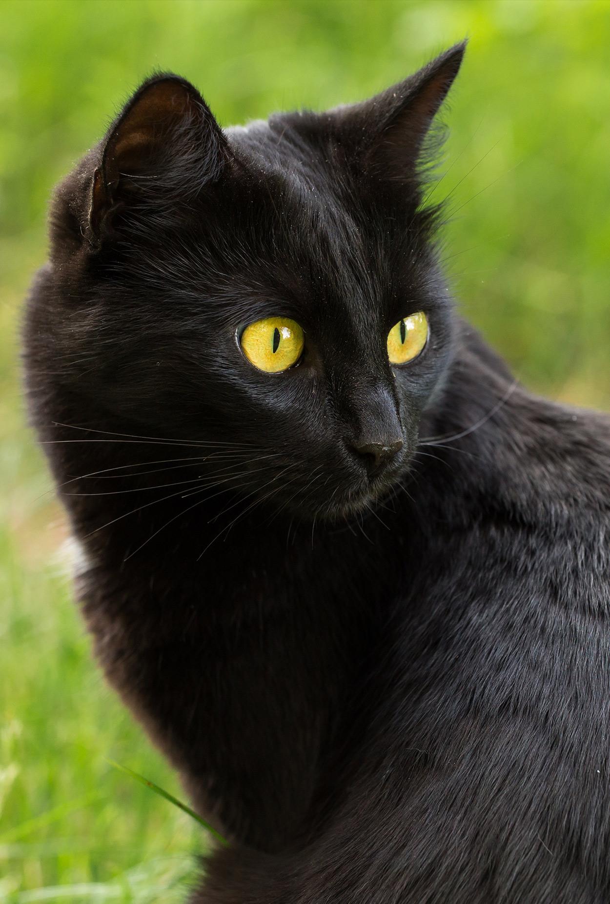 havahart cat traps