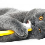 Cat Toothpaste – The Benefits And The Best Examples