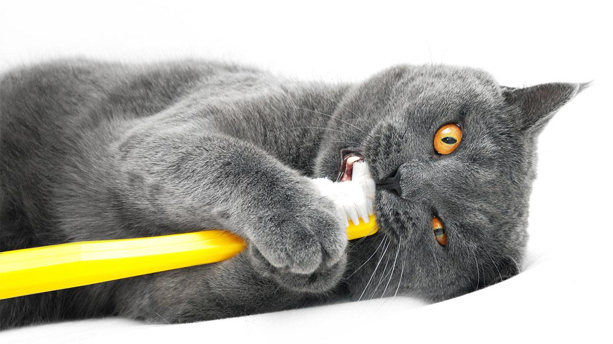 cat toothpaste