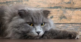 Hot Spots On Cats – Causes, Symptoms, And Skin Saviors