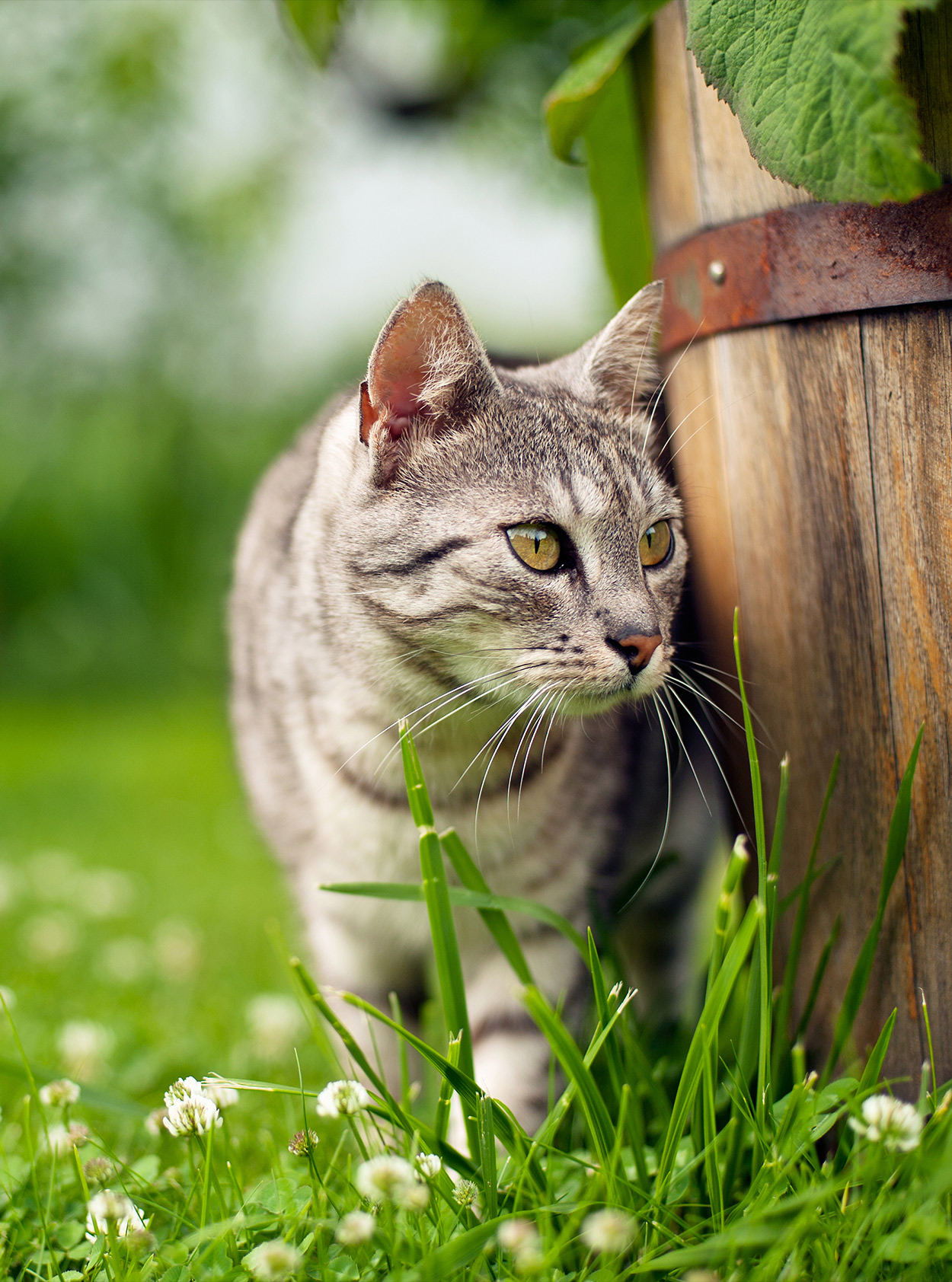 wheatgrass for cats