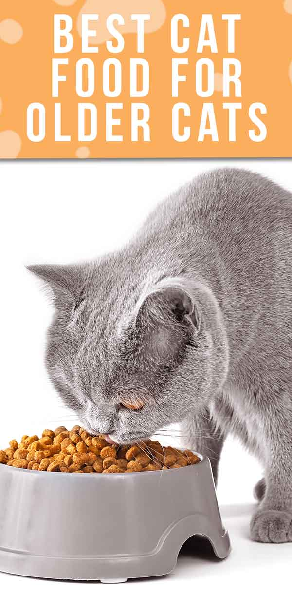 Best Cat Food For Older Cats Choosing The Right Senior Cat