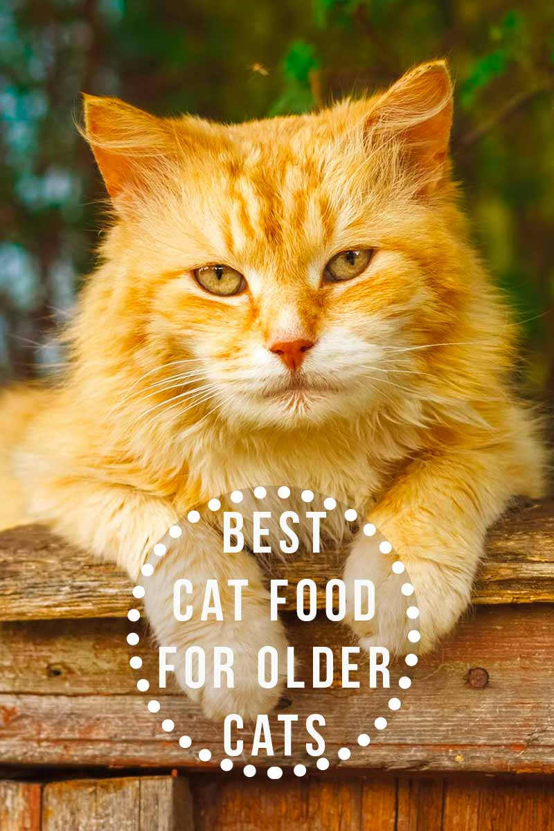Best Cat Food For Older Cats - Health and care advice for older cats.