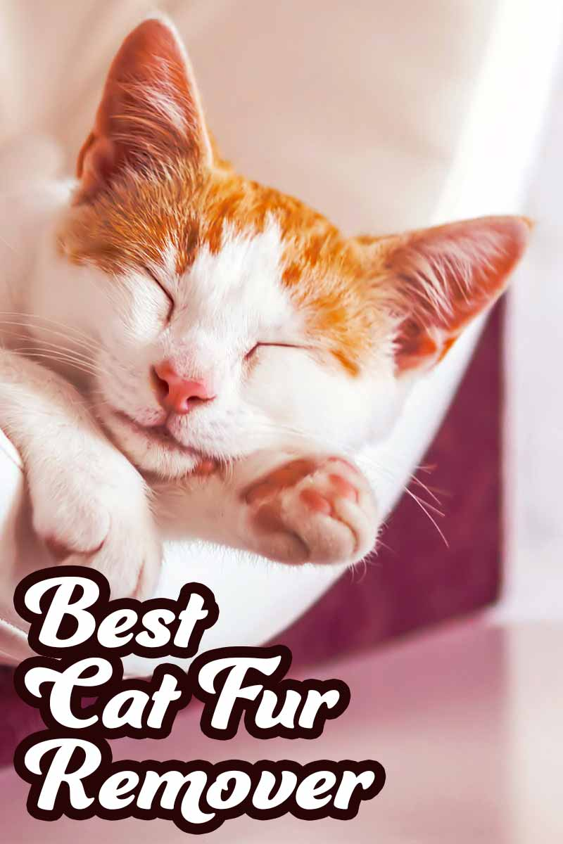Best cat fur remover - Product reviews from The Happy Cat Site.