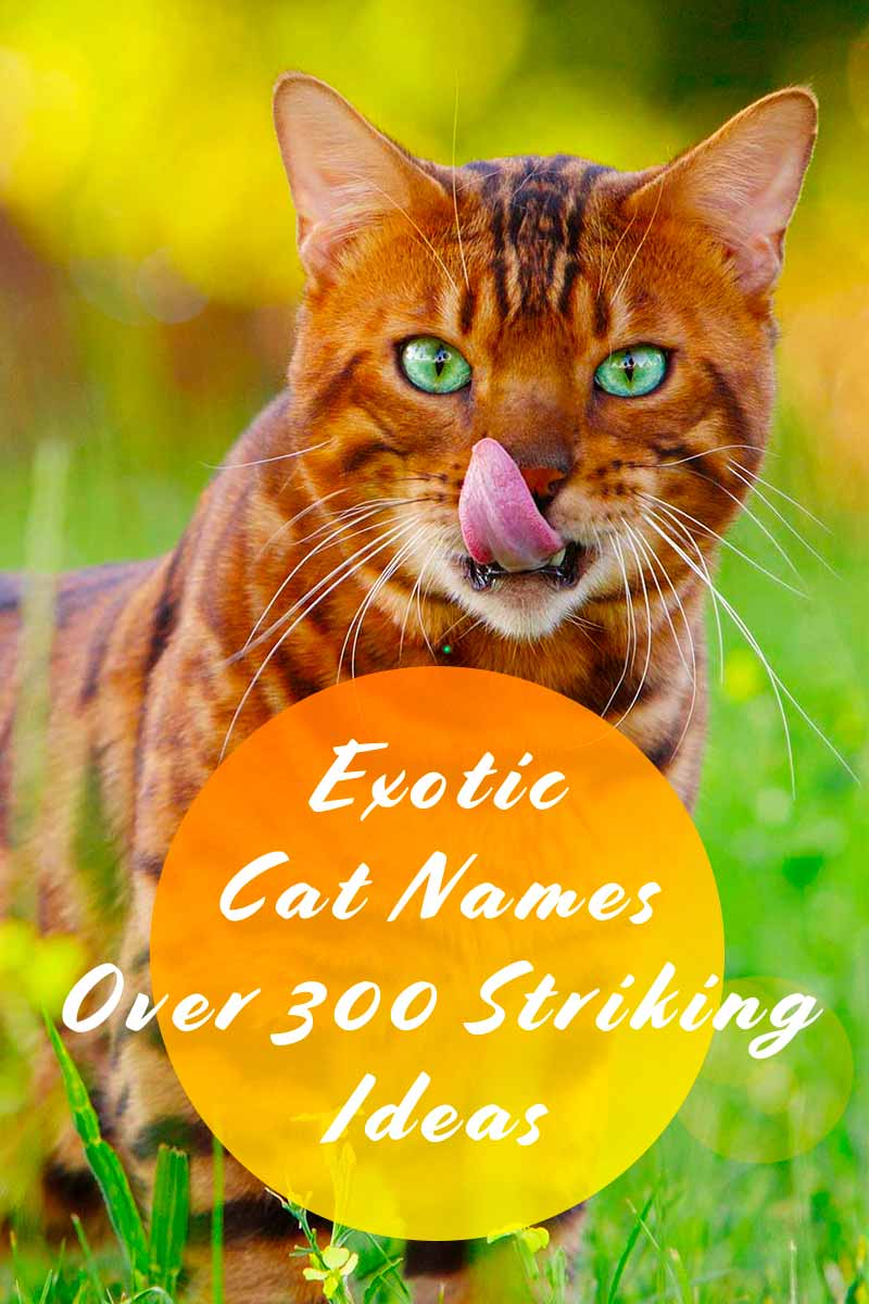 Exotic Cat Names - Over 300 Striking Ideas