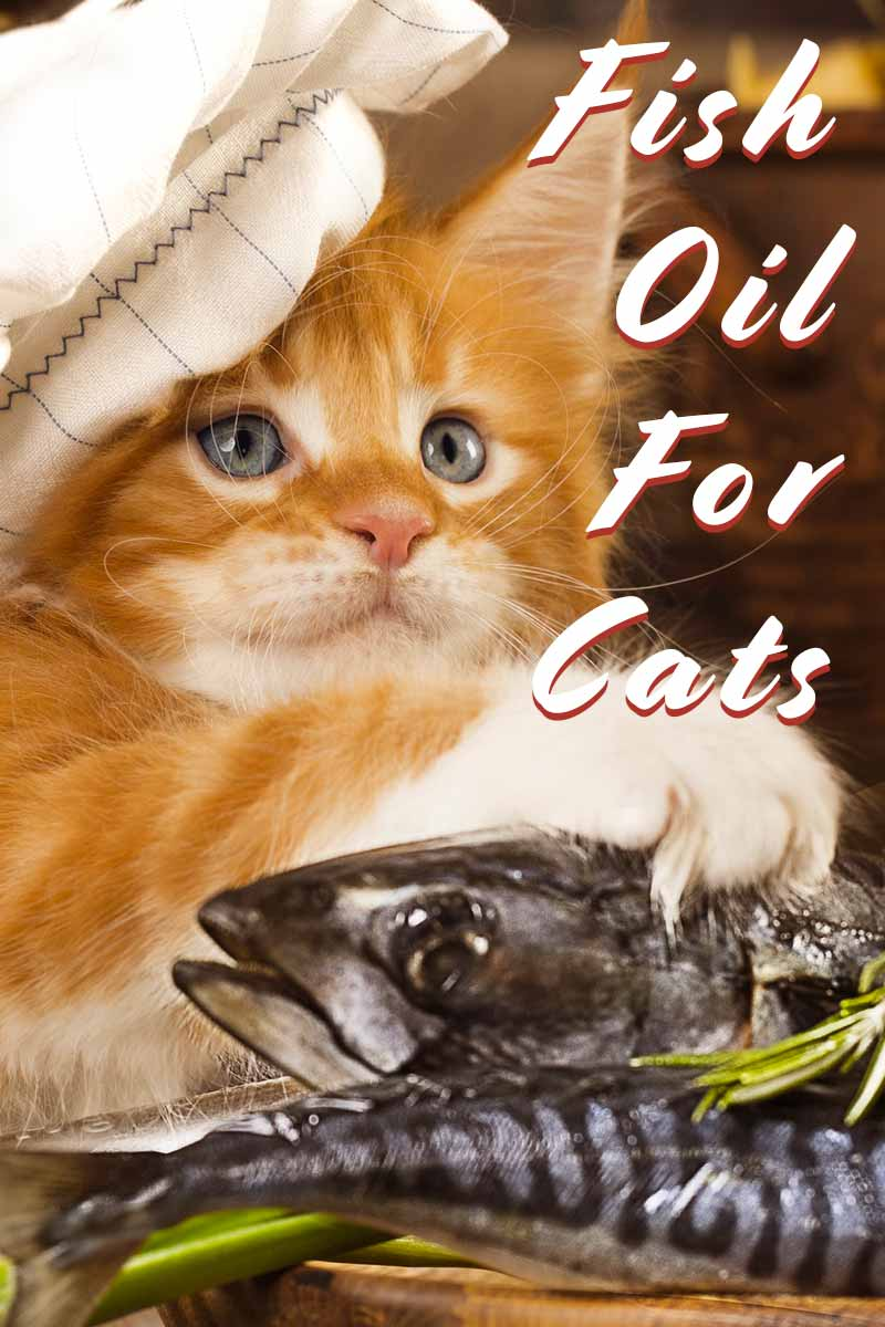 Fish Oil For Cats - Cat health and care advice.