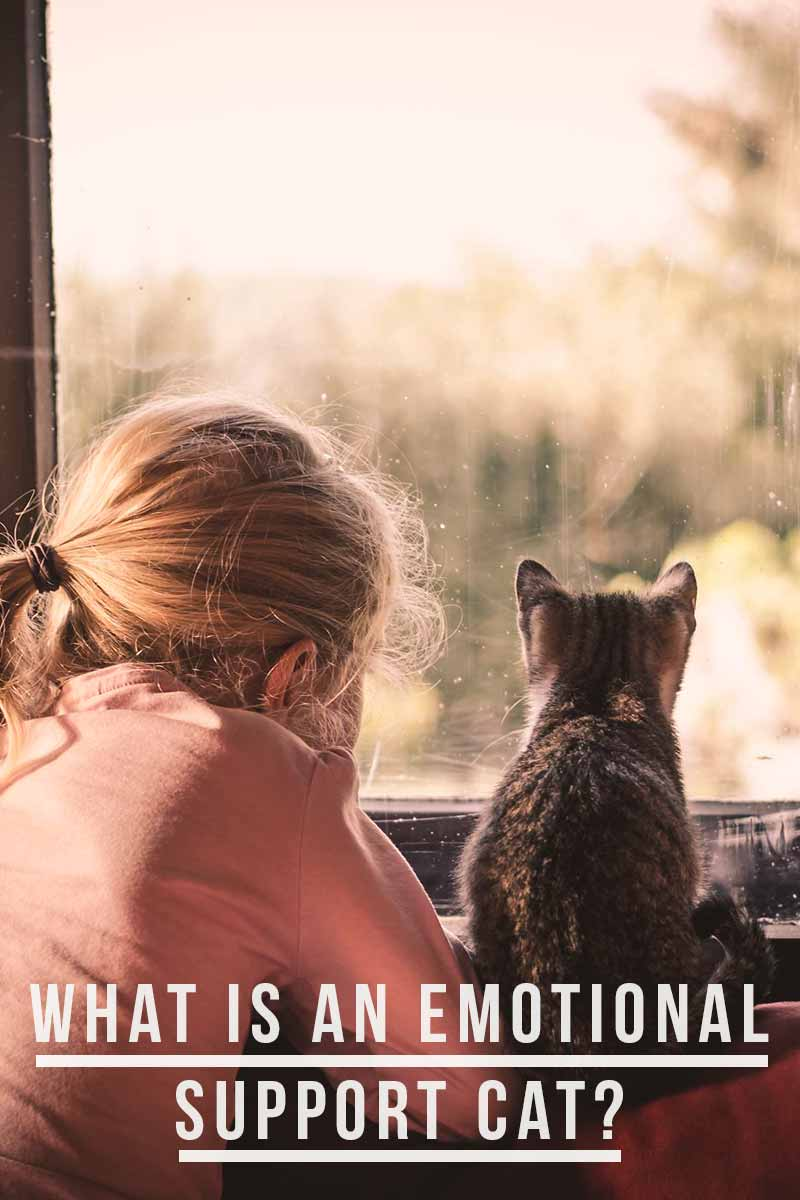 What is an Emotional Support Cat? - Cats that help you get through hard times.