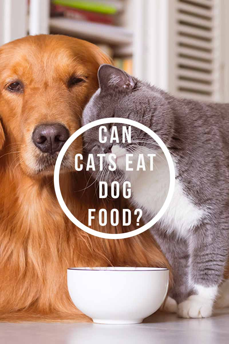 Can cats eat dog food? - Cat health and feeding advice.