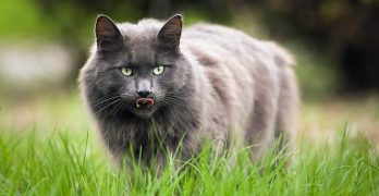 Is Colloidal Silver for Cats an Effective Treatment?