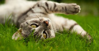 Diatomaceous Earth For Cats – What Is It And What Can It Do?