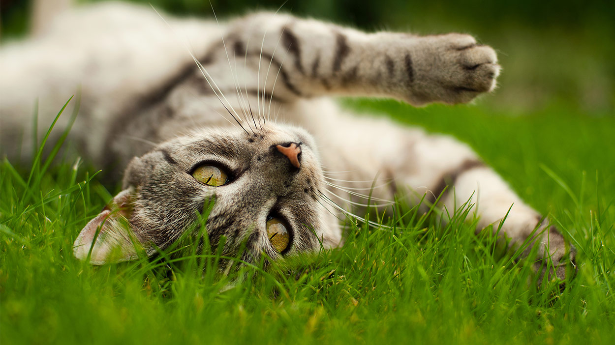 Diatomaceous Earth For Cats What Is It And What Can It Do
