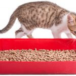 Dust Free Cat Litter – Benefits, Reviews, and Controlling The Smell!