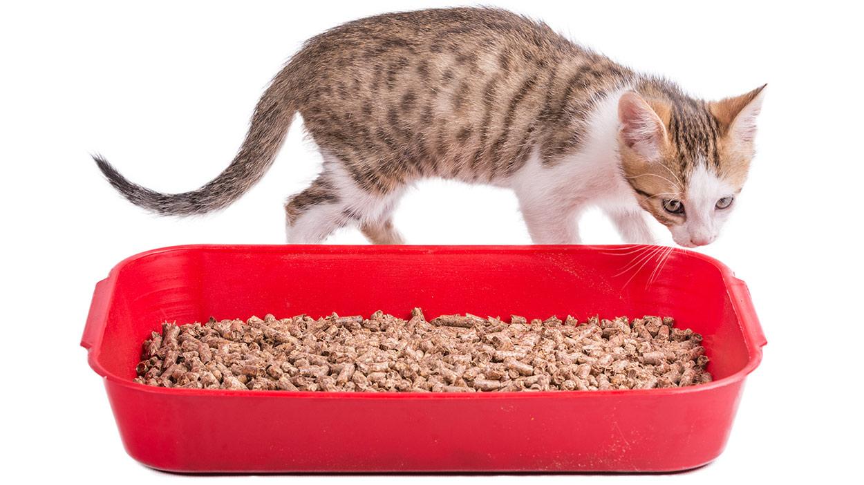 Cat Litter That Is Not So Dusty