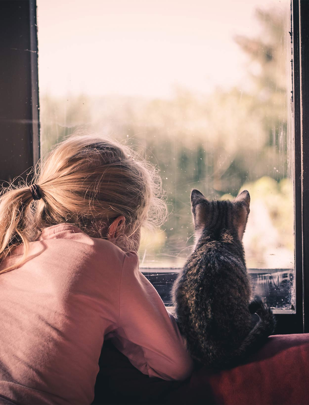 how to train a cat for emotional support