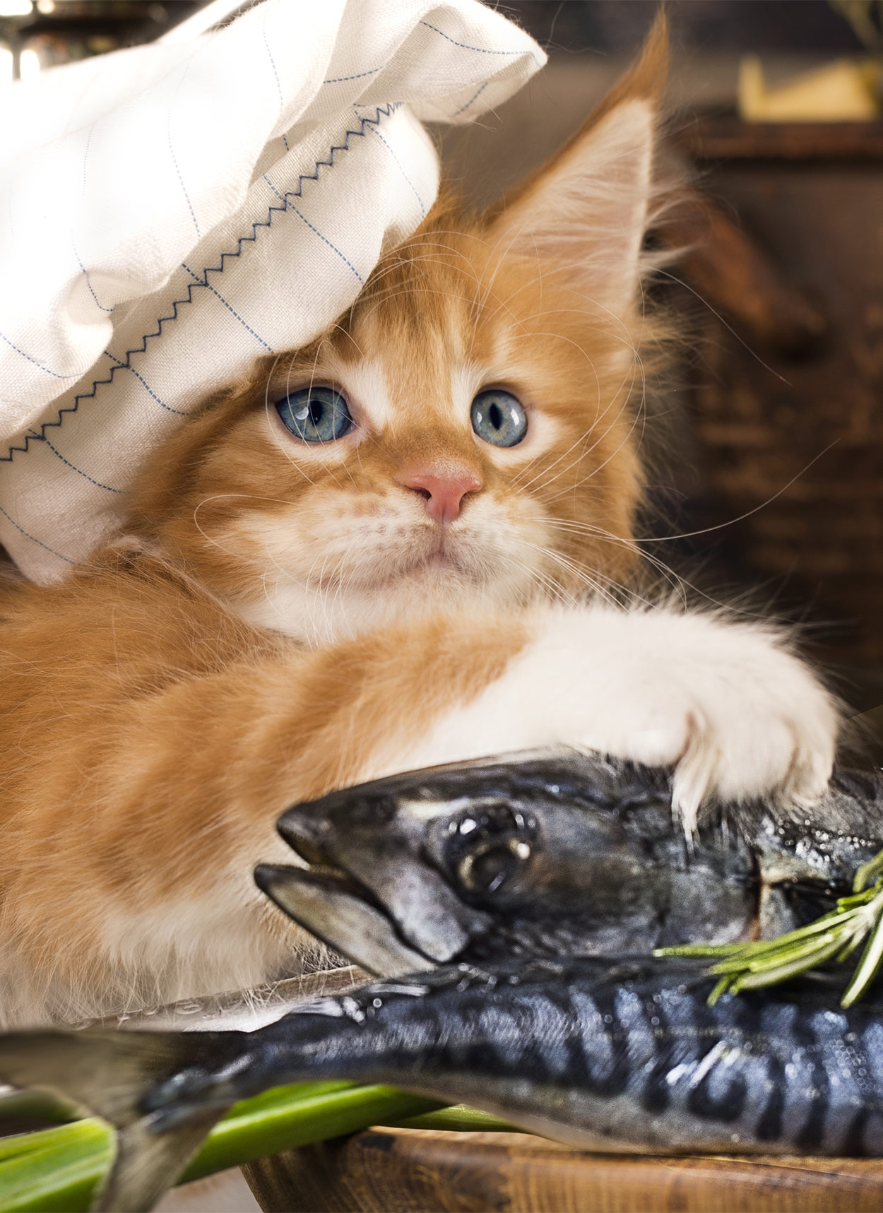 Fish Oil For Cats The Benefits And How To Serve It