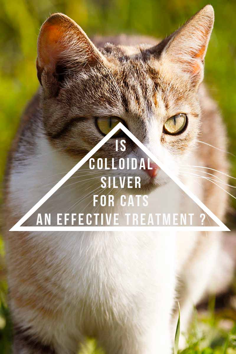 is colloidal silver for cats an effective treatment ? - Cat health and care advice.