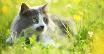 Probiotics For Cats – How Do They Work And Which Are The Best?