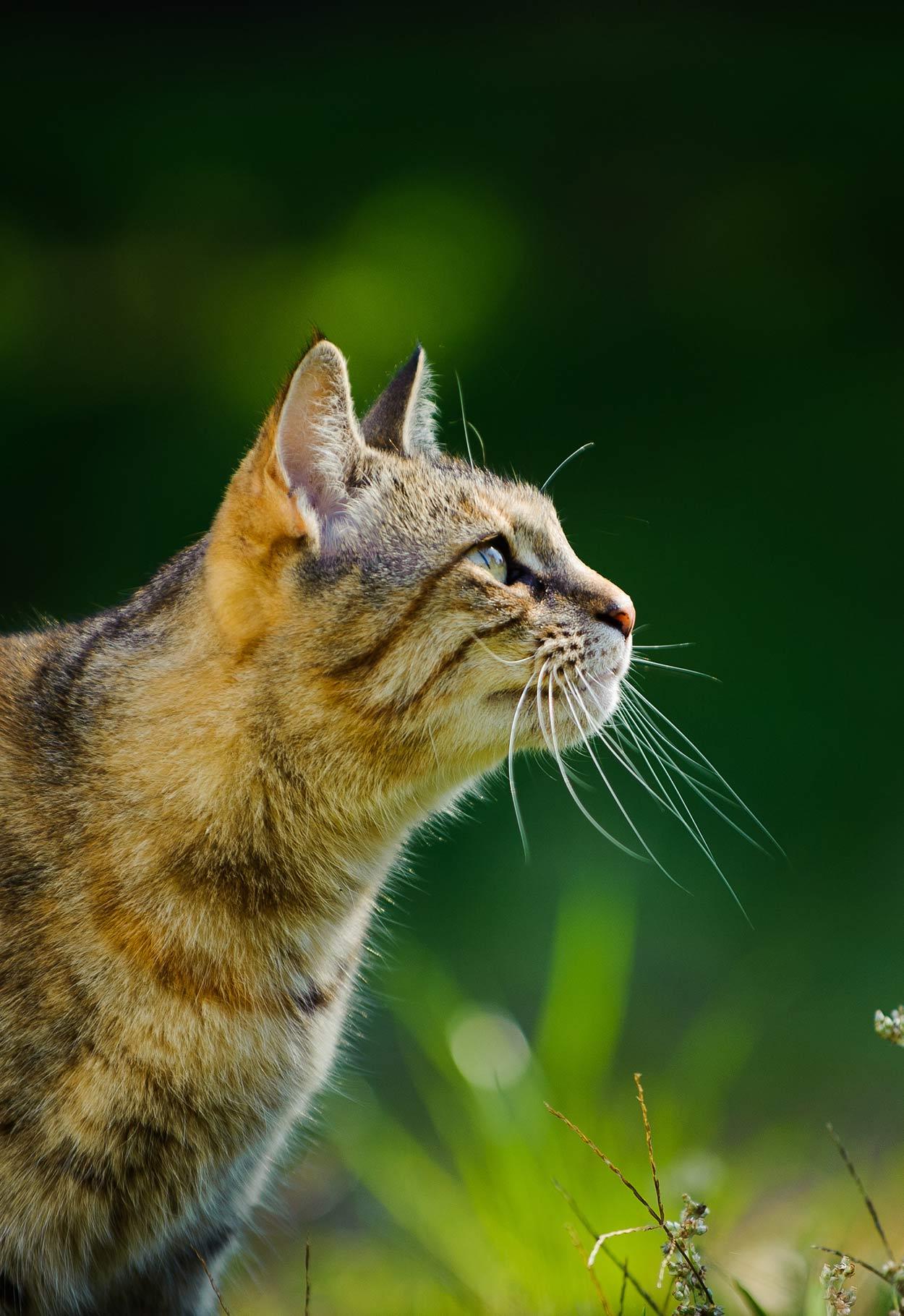 probiotics for cats