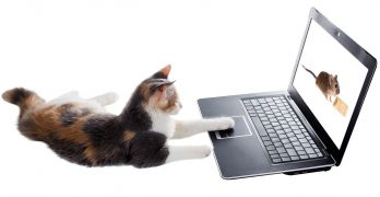 Videos For Cats To Watch – The Finest Online Viewing, And What They Actually See