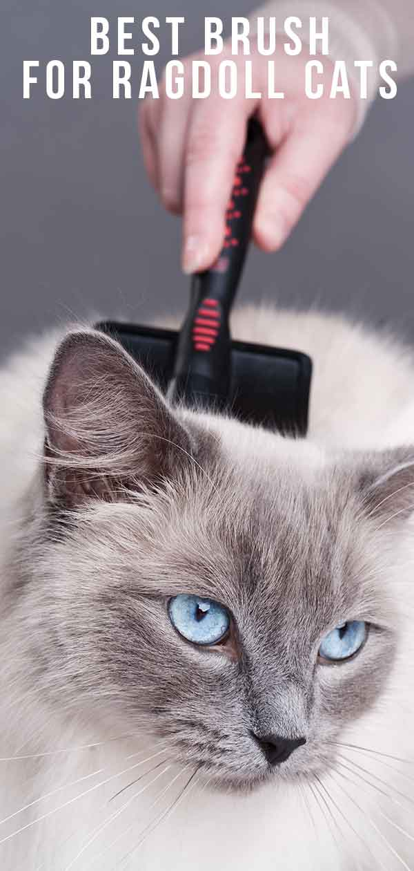 Best Brush For Ragdoll Cats