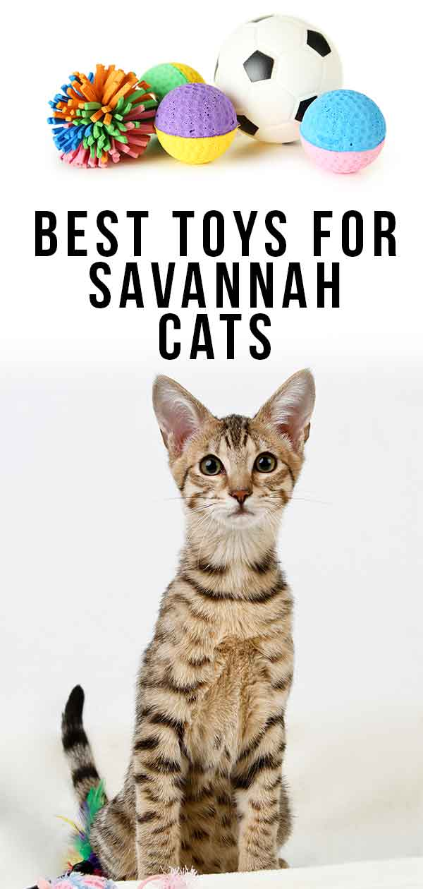 Best Toys For Savannah Cats