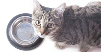 How to Fatten up a Cat That Needs to Gain Weight