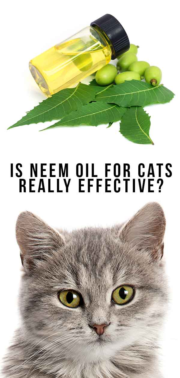 Is Neem Oil For Cats Really Effective?