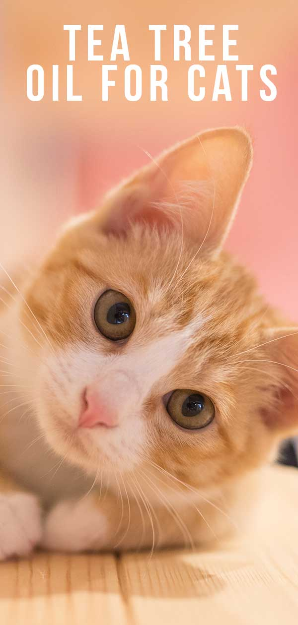 Tea Tree Oil For Cats – Understanding The Risks, And Using It Safely