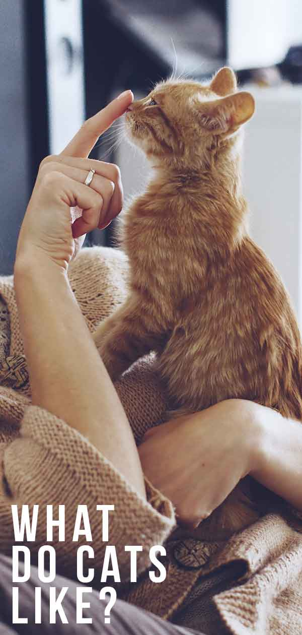 What Do Cats Like? 20 Ways To Make A Cat Happy!