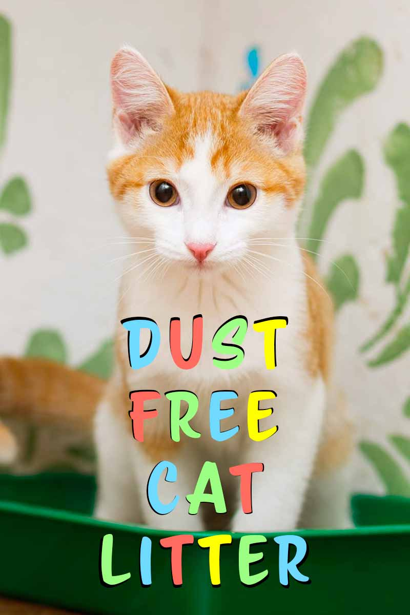 The best dust free cat litters - product reviews for great cat supplies.