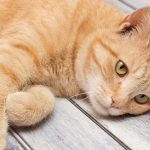 Natural Antibiotics For Cats – What Are They And Do They Work?