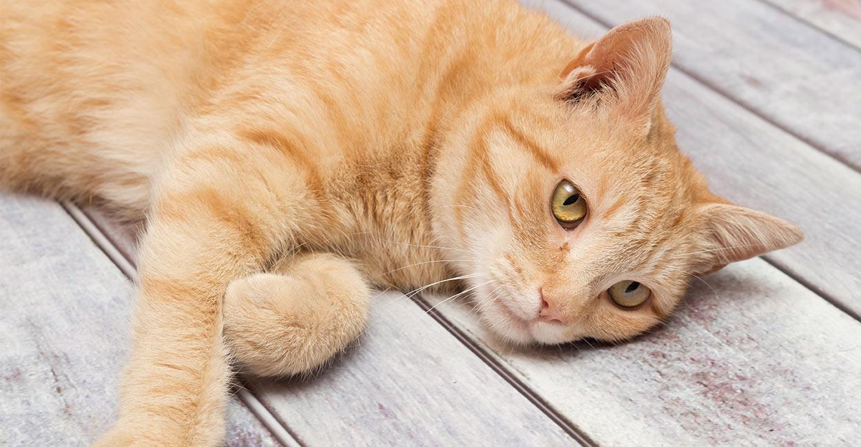 natural antibiotics for cats