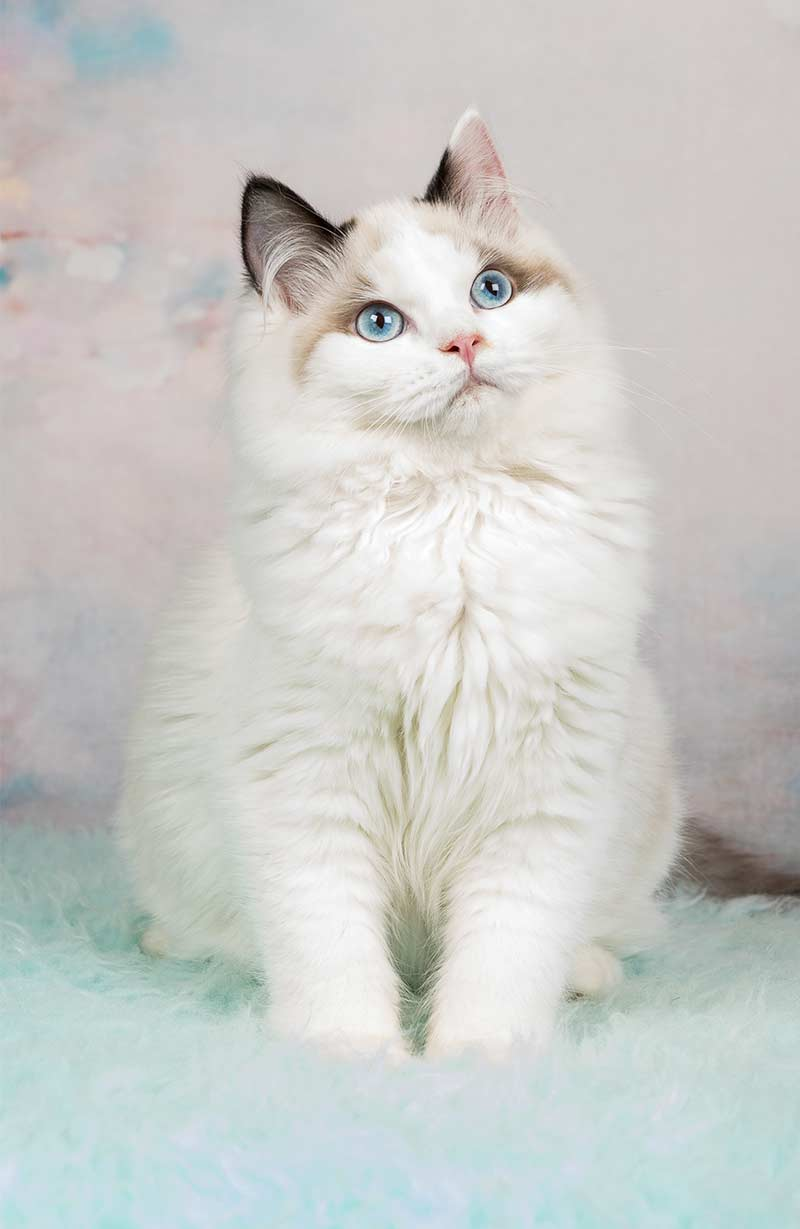 How To Pet A Semi Feral Cat