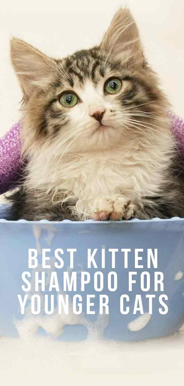 Best Kitten Shampoo For Younger Cats