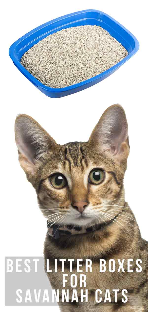 Best Litter Boxes For Savannah Cats