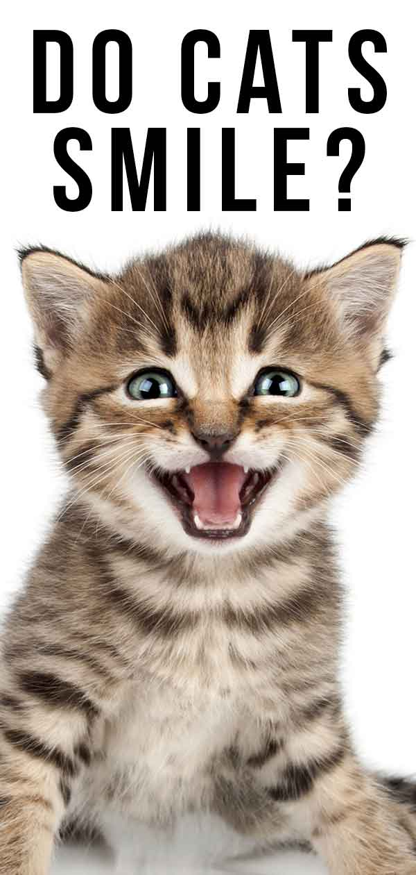Do Cats Smile? …And How To Spot A Happy Cat