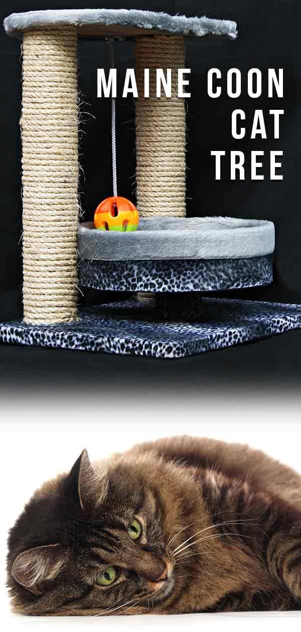 Maine Coon Cat Tree