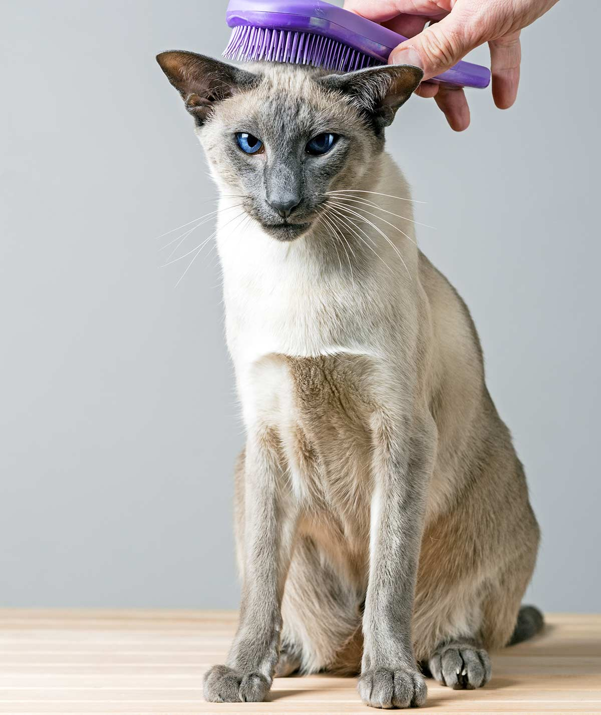 are siamese cats hypoallergenic