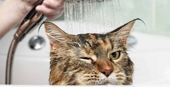 Best Cat Shampoo – For When He Really Needs A Wash!
