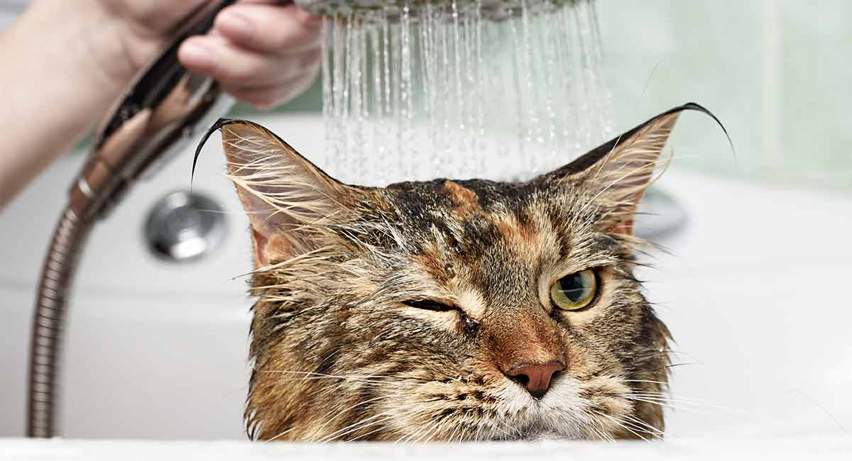 Best Cat Shampoo For When He Really Needs A Wash