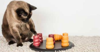 The Best Cat Treat Toys – Combining Fun AND Food!