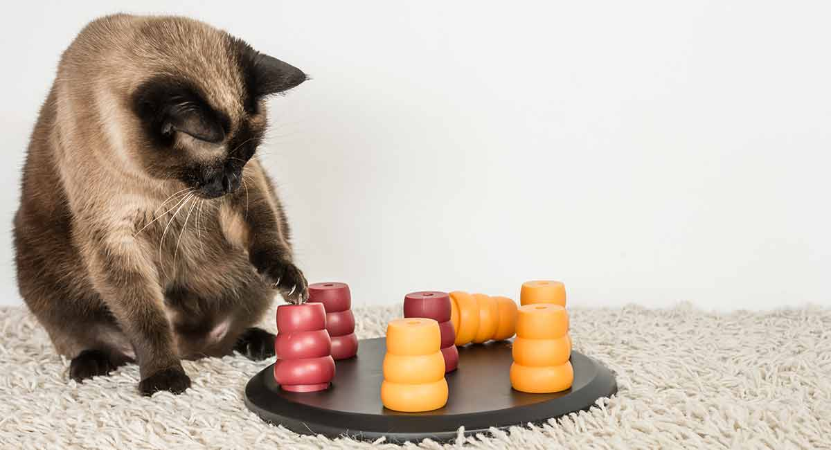 best cat treat toys