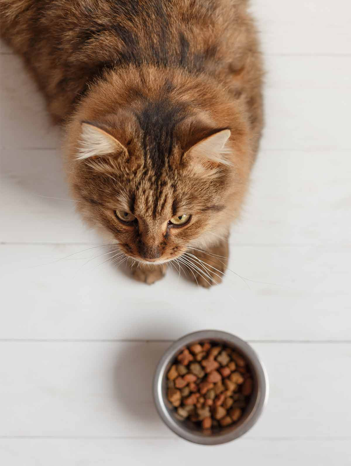 fussy cat food