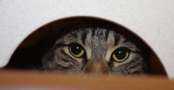 hidden cat litter box