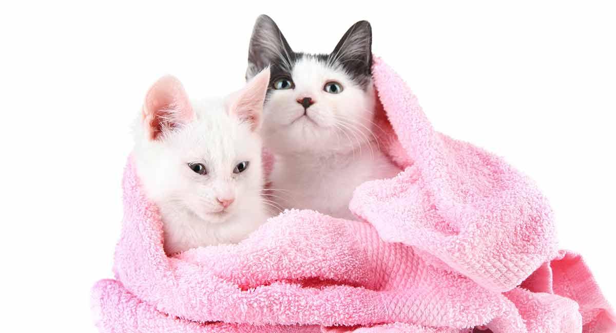 best kitten shampoo
