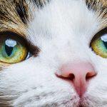 Cat Eye Colors – An Amazing Range Of Shades