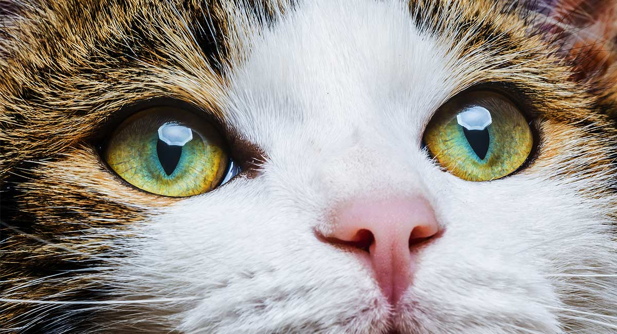 When Do Cats Eyes Change Colors