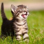 Cat Hiccups – Why Is My Cat Hiccuping?