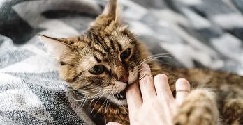 Cat Love Bites – Why Do They Do That?